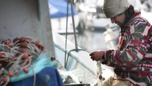 photo of fisherman to illustrate story saying Commission fishing quota proposal ignores scientist call to catch 60% less plaice