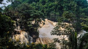 Lawyers wait on detail of Republic of Congo's new forest law