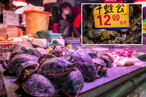 Live frogs and turtles sold at wet market in China despite wild animal trade being blamed for coronavirus pandemic
