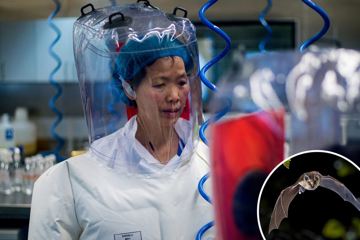 Brit spies 'serving to US uncover fact' about Wuhan lab leak because it emerges China labored on bat virus 96% identical as Covid