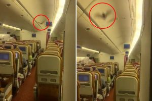 Panic on board US-bound Air India flight as a live BAT flying through the cabin forces pilots to turn back to Delhi