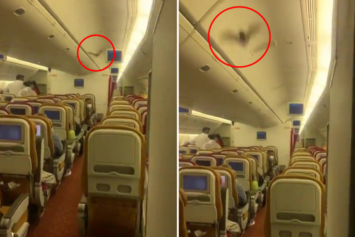 Panic on board US-bound Air India flight as a dwell BAT flying by the cabin forces pilots to show again to Delhi