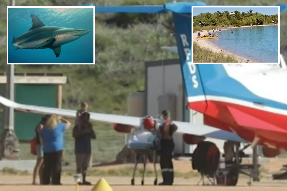 Boy, 10, attacked by two-metre shark whereas snorkelling with dad in Australia as seashore closed