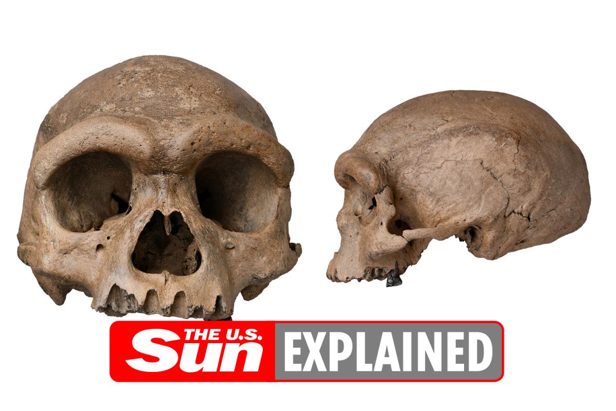 Is the dragon man cranium a human cranium?