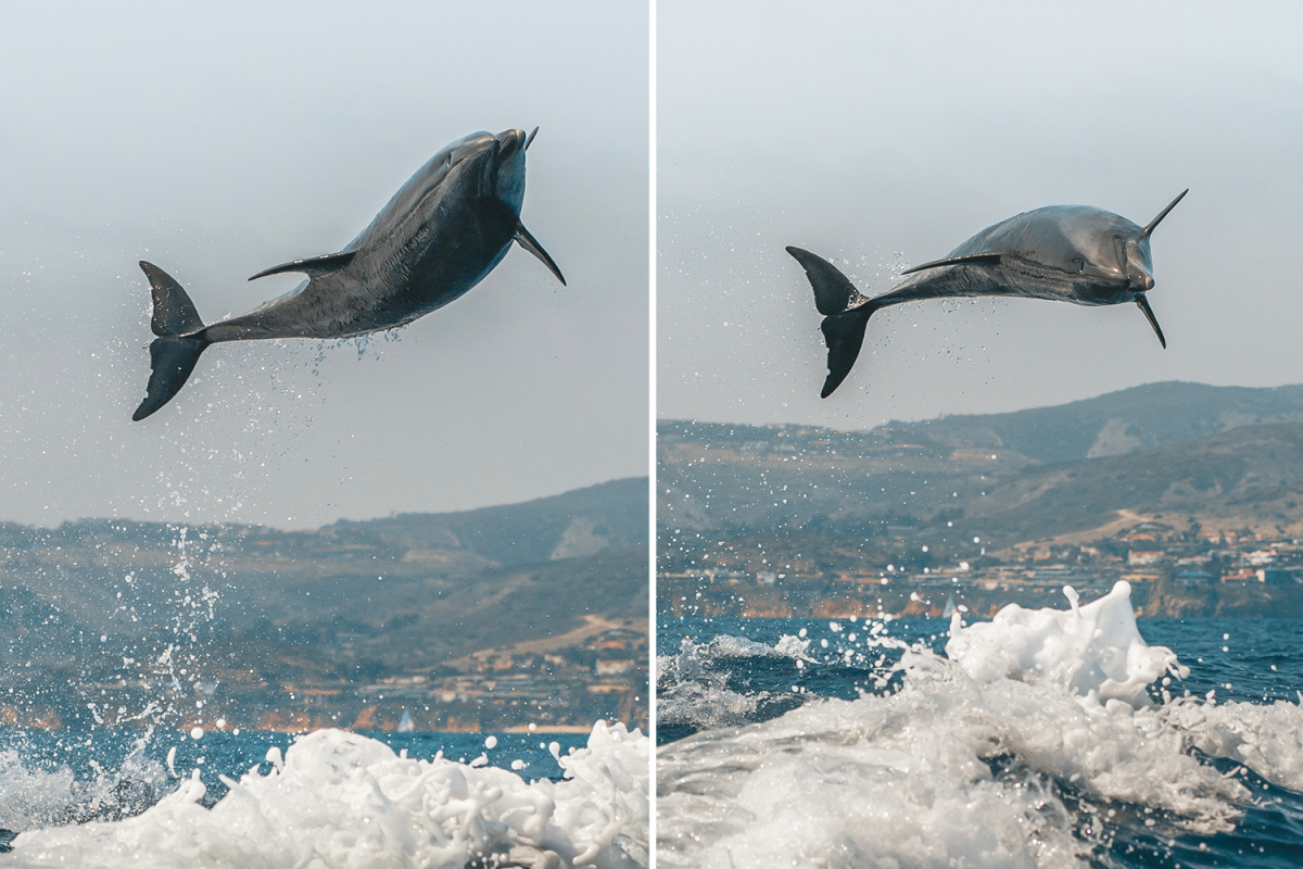 Bottle-nosed dolphin leaps 10ft in air — and provides delighted vacationers a particular present