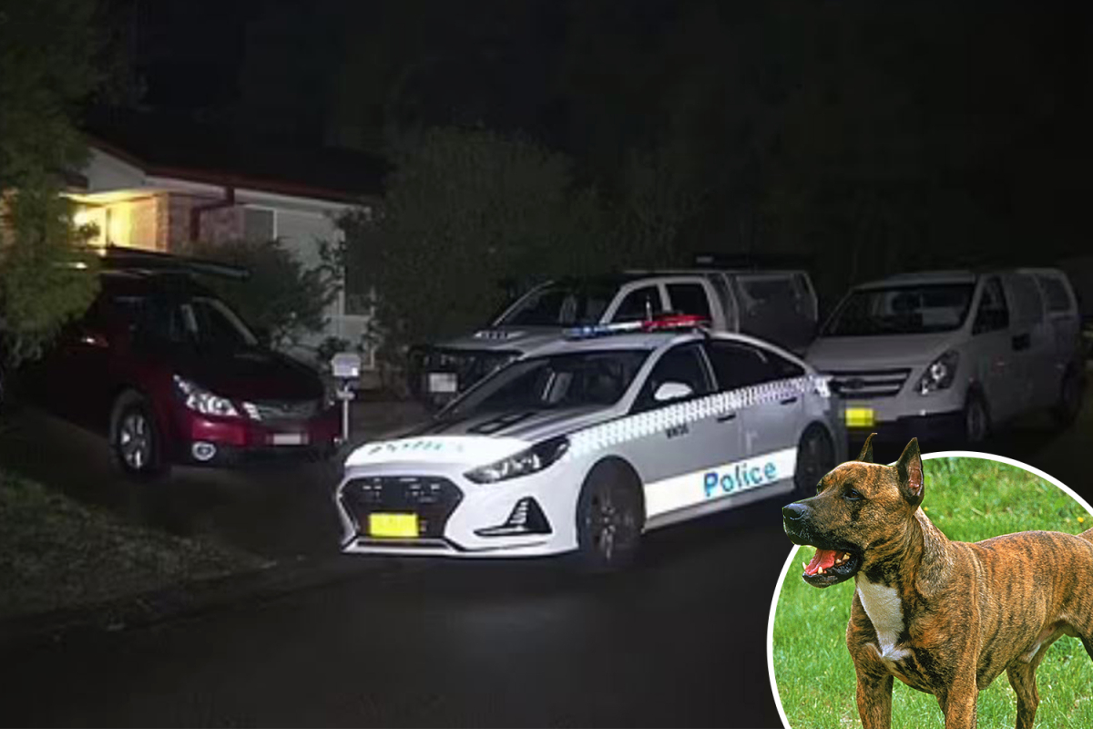 5-week-old child boy mauled to loss of life by household Staffie canine at house in Australia