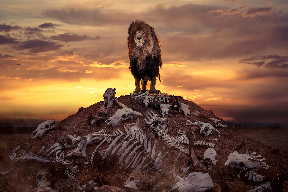 Lion stands proudly atop of a hill of animal carcasses used to feed delight