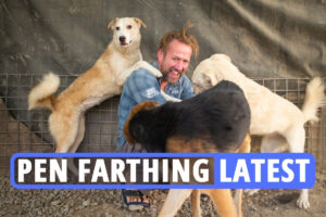 Pen Farthing latest – Taliban stabbed and shot my dogs on way to flight, ex Marine says as service dogs face slaughter